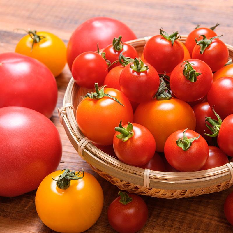 トマトの栄養とブーム